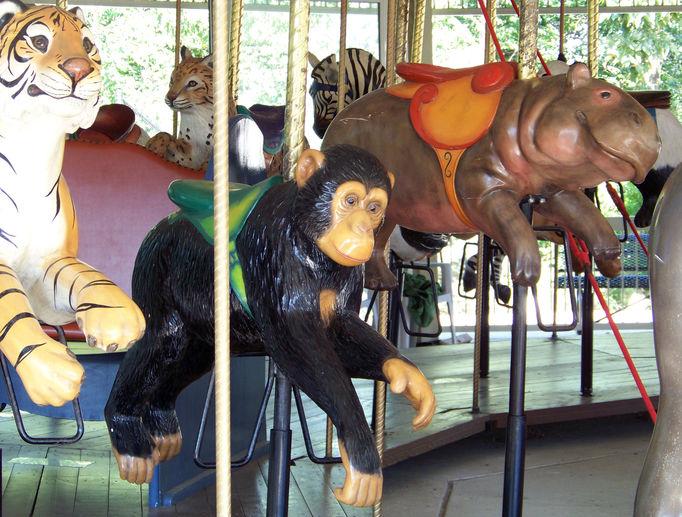 tiger vs hippo