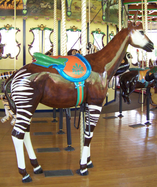 National Carousel Association St Louis Zoo Carousel Okapi